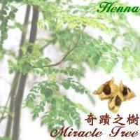 奇蹟之樹-辣木