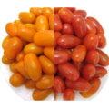 台灣旗山 特選玉女小蕃茄  + 特選麗金小蕃茄 共20斤裝 (約 3-7天出貨) 產銷履歷