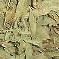 甜菊葉 Stevia(75g) (缺貨)